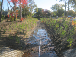 Stormwater flowing down a path
